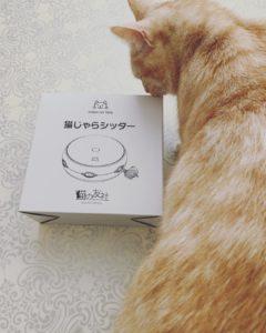 猫 アルバム